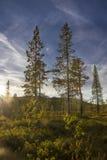 Enkla träd Royaltyfri Foto