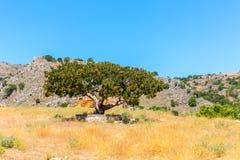 Enkla träd och berg, himmel i Kasakhstan, Almaty, väg i Issyk. Royaltyfri Fotografi