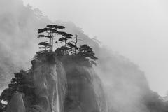 Enkla träd på det dimmiga berget Arkivbild