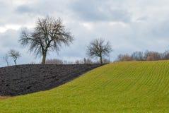 Enkla träd på gränsen av ploga och vinterskördar Royaltyfri Bild