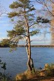 Enkla träd vid sjön royaltyfria bilder