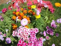 Enkla trädgårdblommor royaltyfri fotografi