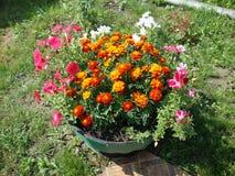 Enkla trädgårdblommor royaltyfri foto