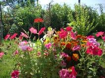 Enkla trädgårdblommor arkivfoton