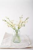Enkla vita orkidér i en glass krus för tappning med utrymme för text Royaltyfria Bilder