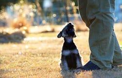 Enlace del amor, del afecto y de la lealtad entre un perro de perrito y un hombre Imagen de archivo libre de regalías