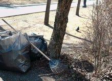 Enlever des déchets en parc Images libres de droits