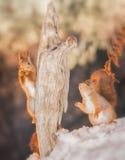 Enlight d'hiver Photos libres de droits
