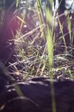 Enlighted grass Stock Photo
