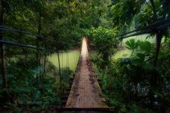 Enlightened吊桥到密林里 免版税库存照片