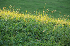Enlightened stripe of grass. On the green meadow Stock Photography