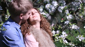 Enloved sensual couple in blossoming cherry orchard. Young man kisses his girlfriend under tree full of cute small white stock footage
