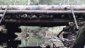 Enmadere el camino, puente de madera en el camino del transporte a través del pequeño río del bosque metrajes