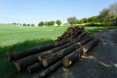 Enmadere la acción en el campo, prados, tronco serradizo, paisaje de la primavera Fotografía de archivo libre de regalías