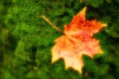 enmascarado El amarillo rojizo de la hoja de arce miente en el musgo verde del tronco de árbol Las fotos fueron tomadas en la len imagenes de archivo