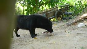 Ennegrezca el perro domesticado comen su comida del arco metrajes