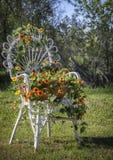 Ennegrezca la vid observada de susan que sube en una silla Imagen de archivo libre de regalías
