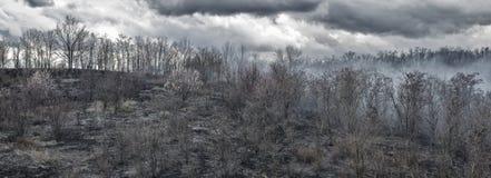 Ennegrezca los árboles carbonizados en el humo después del fuego en el valle el fondo melancólico de las nubes Fotografía de archivo libre de regalías
