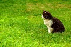 Ennegrézcase con el gato de los ojos verdes en la hierba verde Foto de archivo