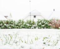 Enneigement frais au-dessus d'herbe verte Images stock