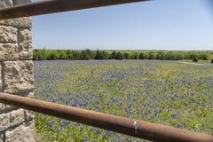 Ennis Texas Bluebonnet Field p? lantg?rd royaltyfria bilder