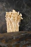 Enoki mushroom Stock Photo