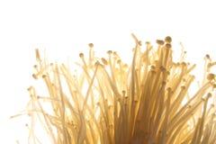 Enoki mushroom. Fresh enoki mushroom isolated on white background Stock Photography