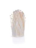 Enoki mushroom, Golden needle mushroom Stock Images