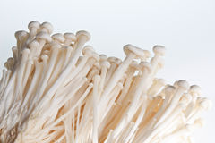 Enoki Mushrooms. A clump of enoki mushrooms isolated against a white background Stock Photos