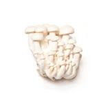 Enoki Mushrooms Stock Images