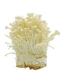 Enoki Mushrooms Royalty Free Stock Photography