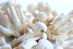 Enoki Mushrooms. A close up shot of a group of enoki mushrooms on a white background Royalty Free Stock Images