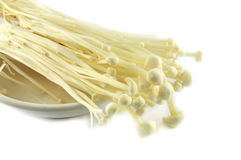 Enoki mushrooms Stock Image