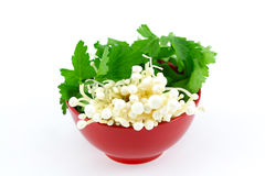 Enoki mushrooms with parsley in red bowl, isolated Stock Photos