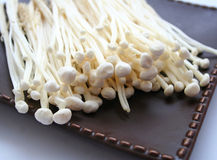Enoki mushrooms Royalty Free Stock Image