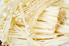 Enokitake or The Golden Mushroom  Royalty Free Stock Photography