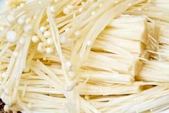 Enokitake oder der goldene Pilz Lizenzfreie Stockfotografie