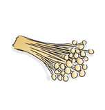 Enokitake. The thin white mushroom used in East Asian cuisine Stock Photography