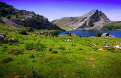 Enol lake  in summer. Asturias Stock Photos