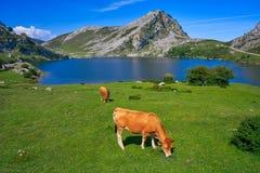 Enol sjö på Picos de Europa i Asturias Spanien royaltyfri fotografi