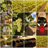 Enologia i wino kolaż fotografia stock