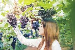 Enologo asiatico della donna che controlla l'uva in vigna fotografie stock
