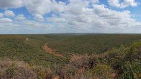 Enorm Afrikaans bospanoramalandschap, aardachtergrond stock afbeelding