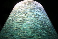Enorm behållare mycket av fisken Arkivbilder