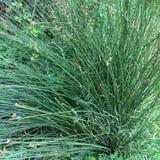 Enorm buske av gräs, tät vegetation, grönska som en bakgrund royaltyfri fotografi