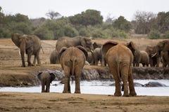 ENORM elefantfamilj, Kenya Arkivfoton