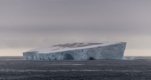 Enorm flock av antarktiska stormfåglar överst av isberget i tabellform, sydligt hav, Antarktis arkivfoto