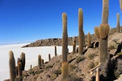Enorm kaktus, Salar de Uyuni, Bolivia Fotografering för Bildbyråer