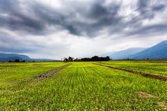 Enorm landschap van aanplantingsgebied in Taiwan royalty-vrije stock fotografie