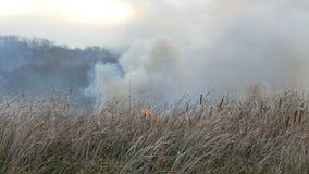 Enorm rök från en löpeld i skogstäppen Brännande torrt gräs och buskar Torr vass som bränner från en flamma arkivfilmer